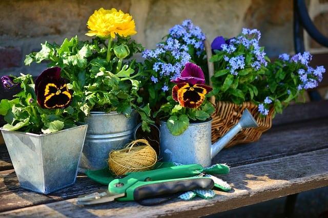 garden, flowers, plant flowers
