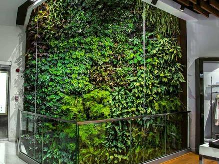 Mur végétal intérieur : témoignages et réalisation