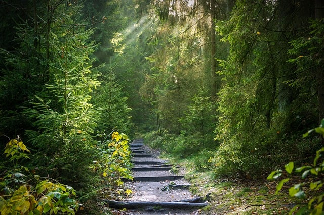 Forest Bathing or the ultimate natural remedy against anxiety