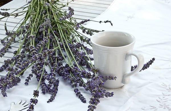 La lavande, remède efficace pour soigner le mal de gorge