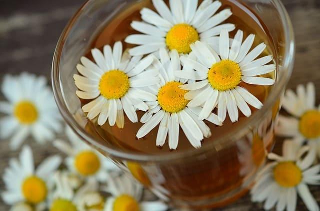 chamomille pour reduire le stress et l'anxiete