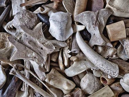 Des os plus solides avec ces 5 super aliments