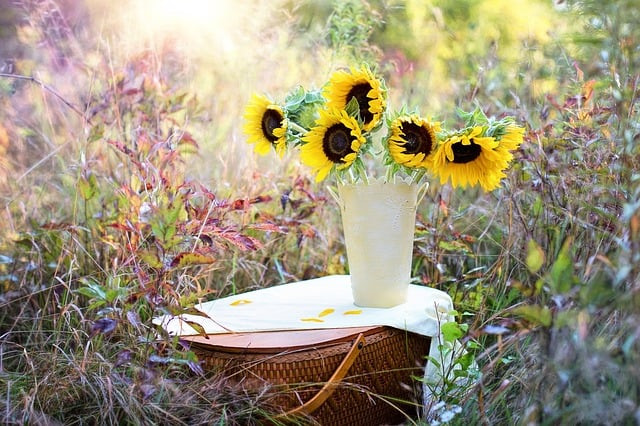 sunflowers, vase, fall