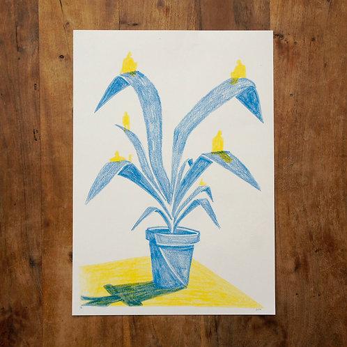 Plante - Riso