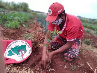 MST lança aplicativo para mapear plantio de árvores pelo Brasil