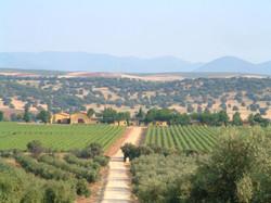 Панорама усадьбы Иниго