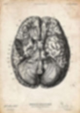 brain_vintage.JPG