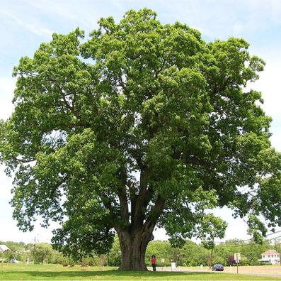 Tree Conservation-BioDiversity