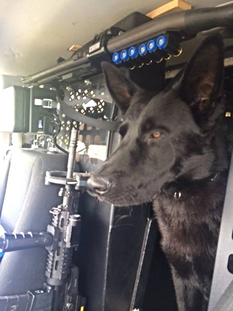 TACTICAL POLICE DOG.jpg 2015-5-5-20:51:47