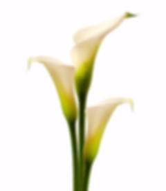 Sam Guarna Funeral Arum Lilies