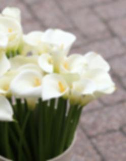 arum-lillies1 (1).jpg