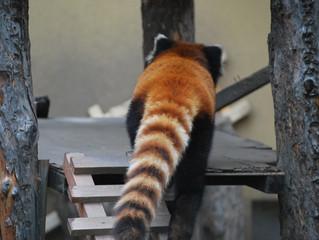 長ーい尻尾が重要!ロングテールSEO