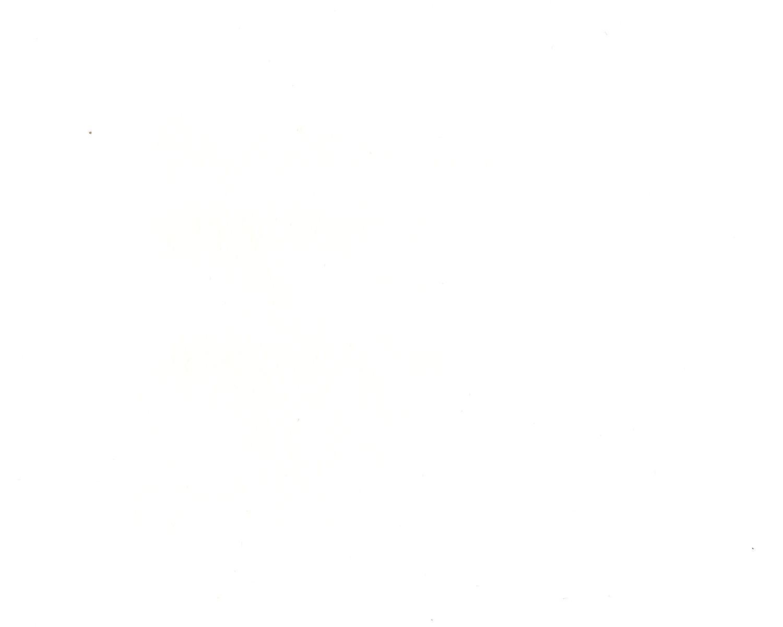White - 001