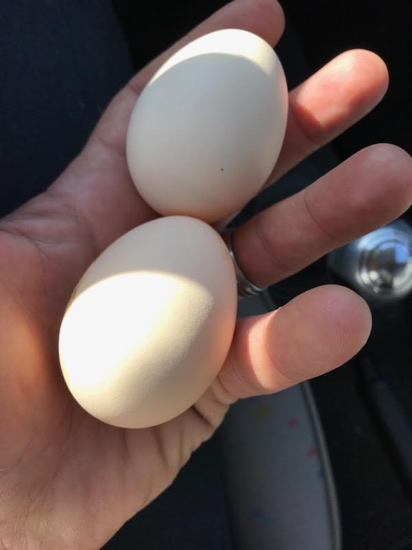 Coquette et omelette