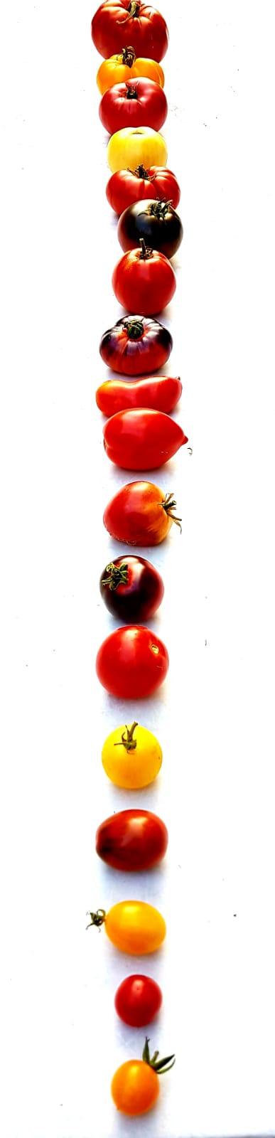 18 variétés de solanacées