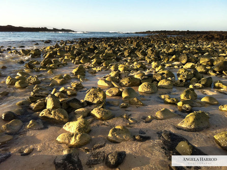 Sunlight on Beach rocks.jpg