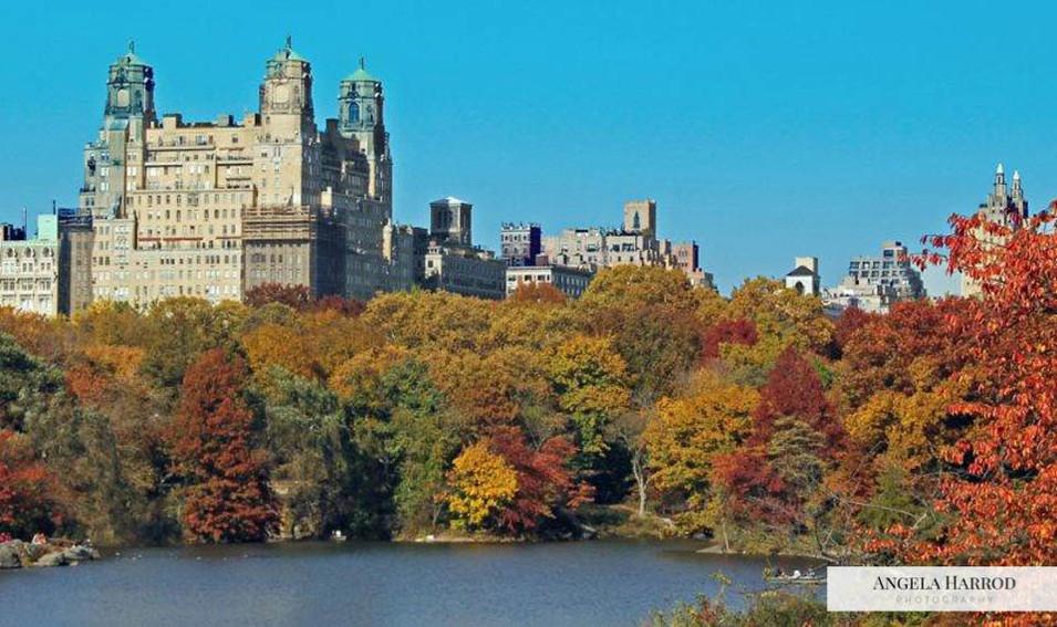 Central park 2.jpg
