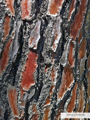 Tree Trunk bark.jpg
