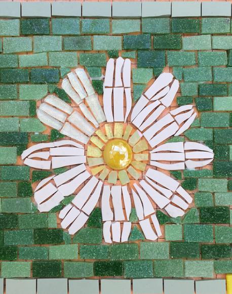 Nancy's daisy