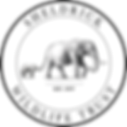 DSWT_LOGO_Primary.png