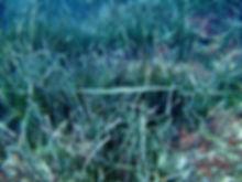 Cornet Fish.jpg