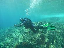 NM diving.jpg