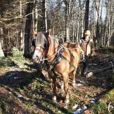 Horse Logging Demonstration