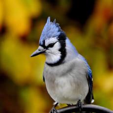 Birding PEI