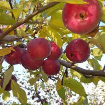 Wintermoor Orchard