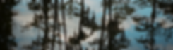 trees (1 of 1)_00000.png
