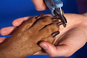 nail clipping, dog nails, dog nail clipping, clipping dog nails, dog nail clipper