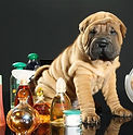 dog, puppy, dog cologne, pet cologne, sharpei