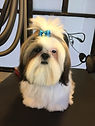shih tzu, shitzu, dog, puppy, dog with bow, dog getting groomed, dog grooming, pet grooming