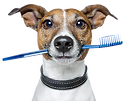 dog, terrier, dog with toothbrush, dog holding toothbrush, toothbrush, dog teeth