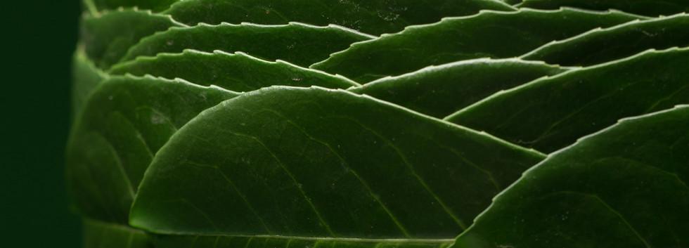 Prunus-7391.jpg