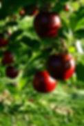 Fruticultura.jpg
