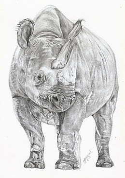 Realistic Life Like Graphite Rhino Drawing Portrait Commission