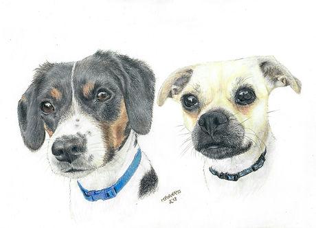 Realistic Life Like Pet Dog Colour Pencil Animal Portrait Drawing Commission