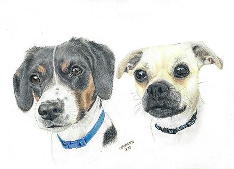 Realistic Life Like Colour Pencil Dog Pet Drawing Portrait