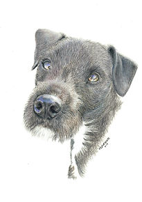 Realistic Life Like Colour Pencil Dog Drawing Portrait Commission