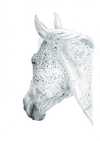 Realistic Life Like Graphite Horse Drawing Portrait