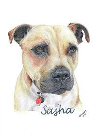 Realistic Life Like Colour Pencil Dog Pet Drawing Portrait Commission