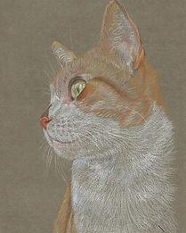 Life Like Realistic Colour Pencil Cat Portrait Drawing Commission