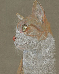 Life Like Realistic Colour Pencil Cat Portrait Drawing Commission