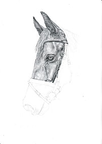 Realistic Life Like Graphite Horse Portrait DRawing Work In Progress