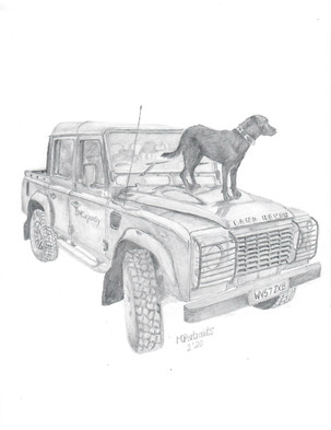 Land Rover Dog