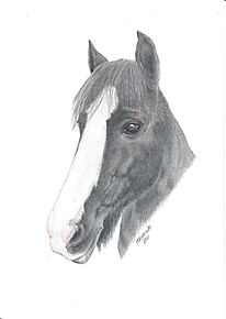 Realistic Life Like Colour Pencil Horse Art Drawing Portrait Commission