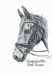 Realistic Graphite Horse Pet Drawing Portrait