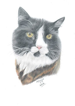 Realistic Life Like Cat Colour Pencil Drawing Portrait Commission