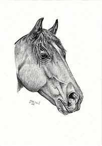 Realistic Life Like Graphite Horse Portrait DRawing Commission